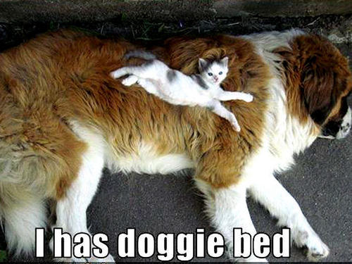 Animal Humor wallpaper called dog & cat funny