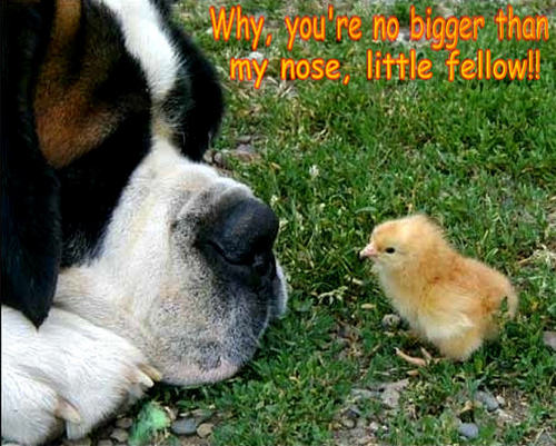 dog & chick funny