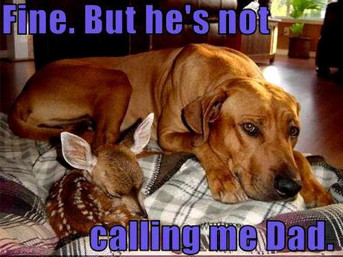dog & deer funny