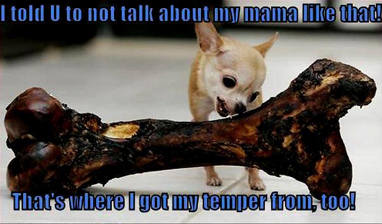 Bullboxer Puppies For Sale Topix Design | Dog Breeds Picture