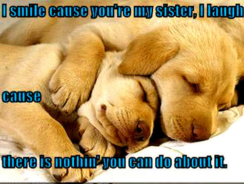 Animal Humor wallpaper possibly with a labrador retriever and a golden retriever titled dog funny