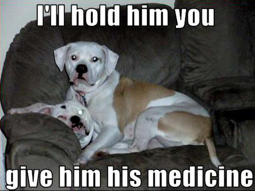 dog funny
