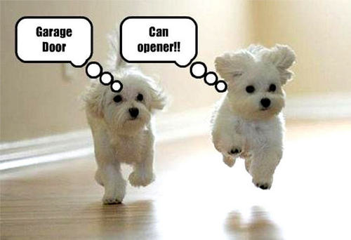 Animal Humor wallpaper with a maltese dog titled dog funny