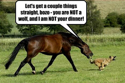 dog & horse funny