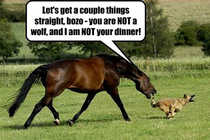 Horse jokes - photo#22