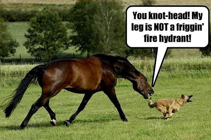 Animal Humor dog & horse funny