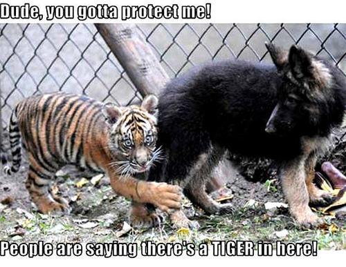 dog & tiger funny