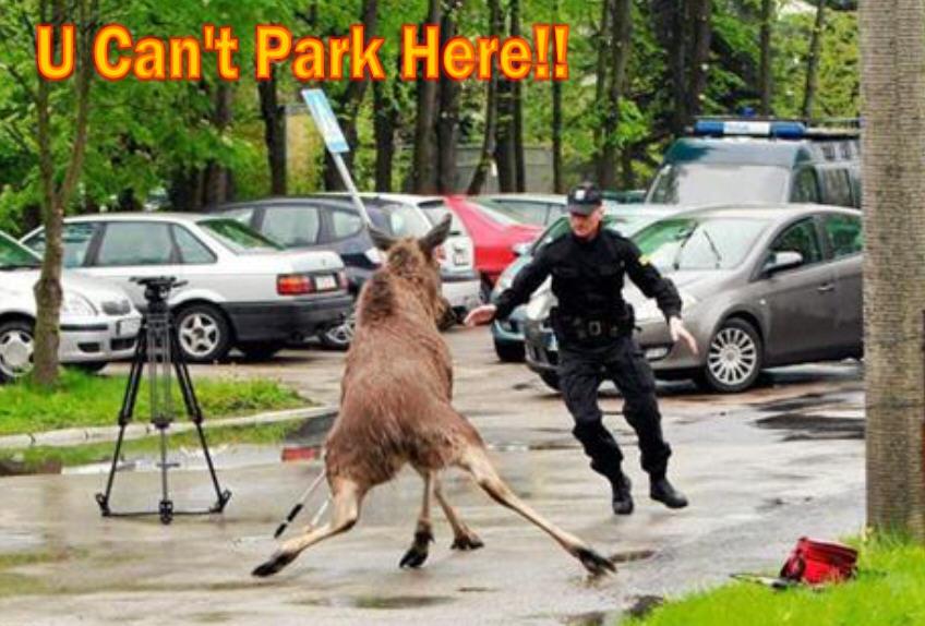moose funny