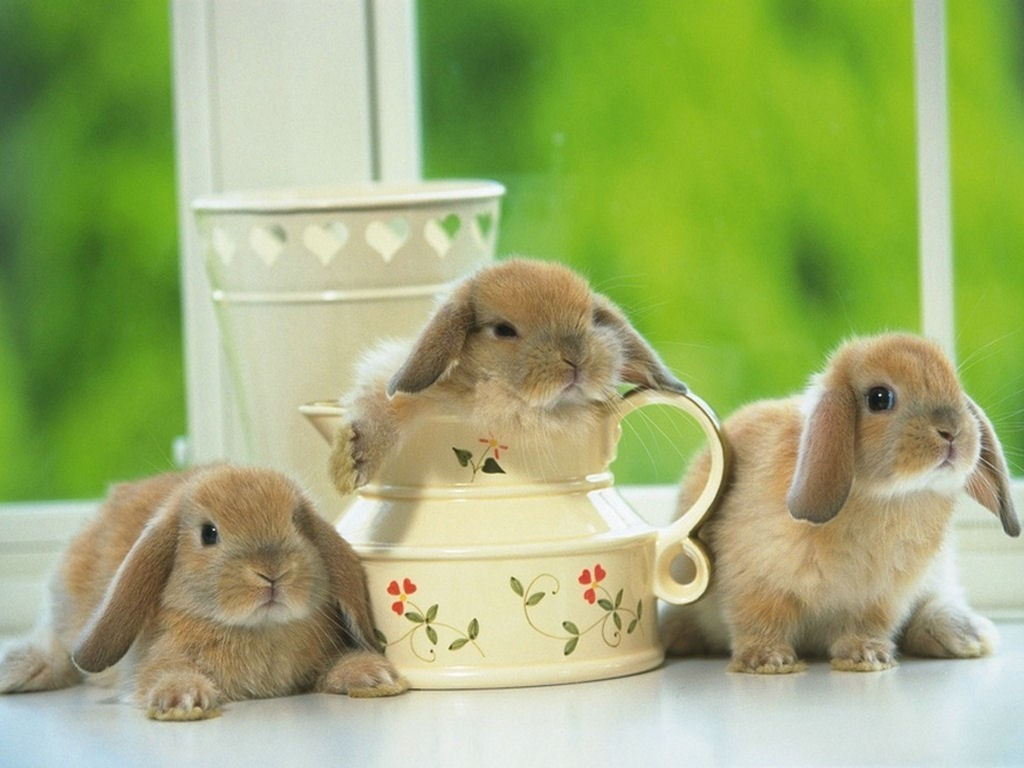 Cute Bunny Animals