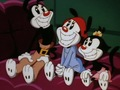 Animaniacs - animaniacs photo