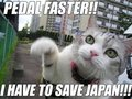 Cat wants to save japan too! - save-japan photo