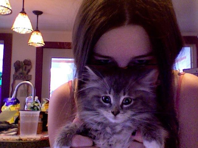 My new cat Ika