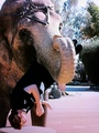 Photo of Rob in the Mouth of Tai the Elephant - twilight-series photo