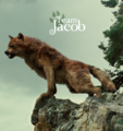 Team Jacob - fire-and-ice-the-wolf-pack fan art