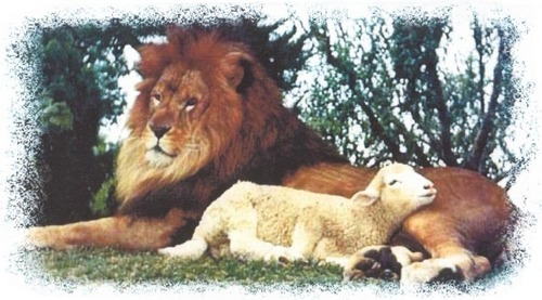 The lion and the agnello
