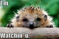 hedgehog funny - animal-humor photo