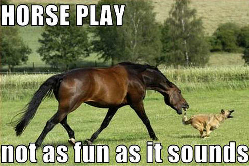 horse & dog funny