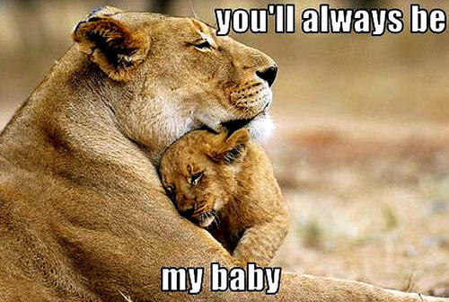 lion funny - animal-humor Photo