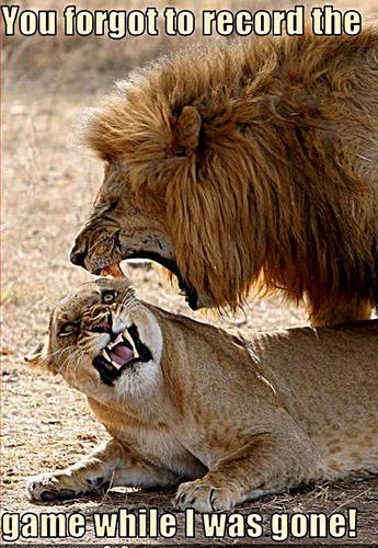 lion funny