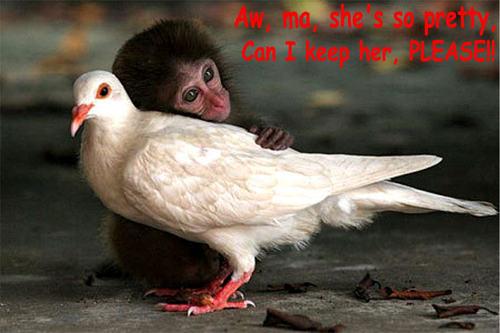 monkey & bird funny