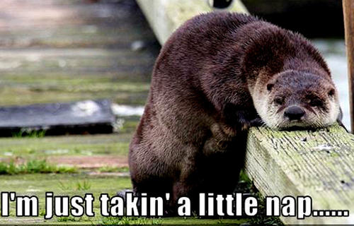 Animal Humor wallpaper probably with a sea otter and an otter called otter funny
