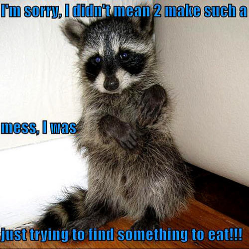 Animal Humor wallpaper containing a common raccoon and a raccoon called raccoon funny