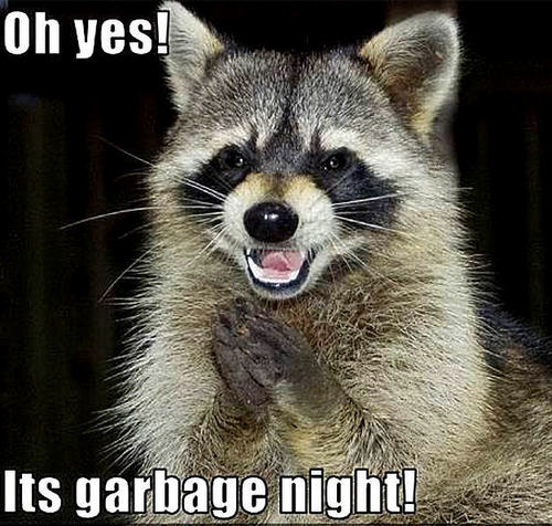 raccoon funny - animal-humor Photo