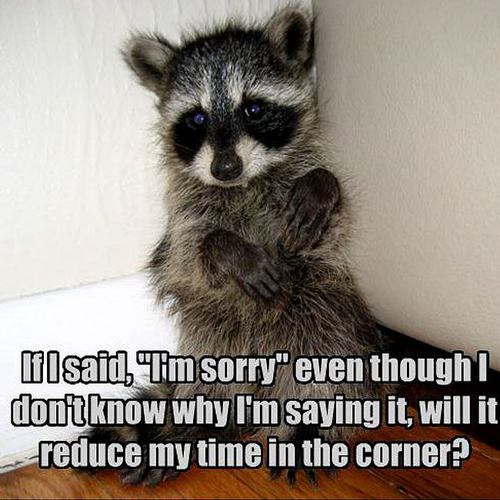 Animal Humor wallpaper with a common raccoon and a raccoon called raccoon funny