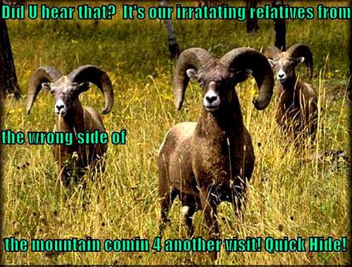 ram funny