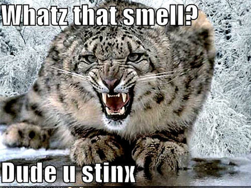 snow leopard funny