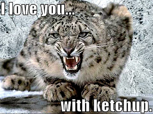 Animal Humor wallpaper titled snow leopard funny