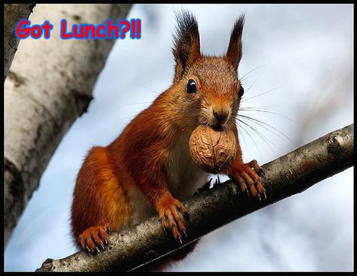 squirrel funny
