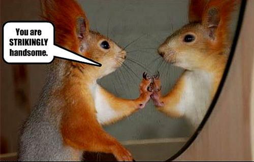 eichhörnchen funny