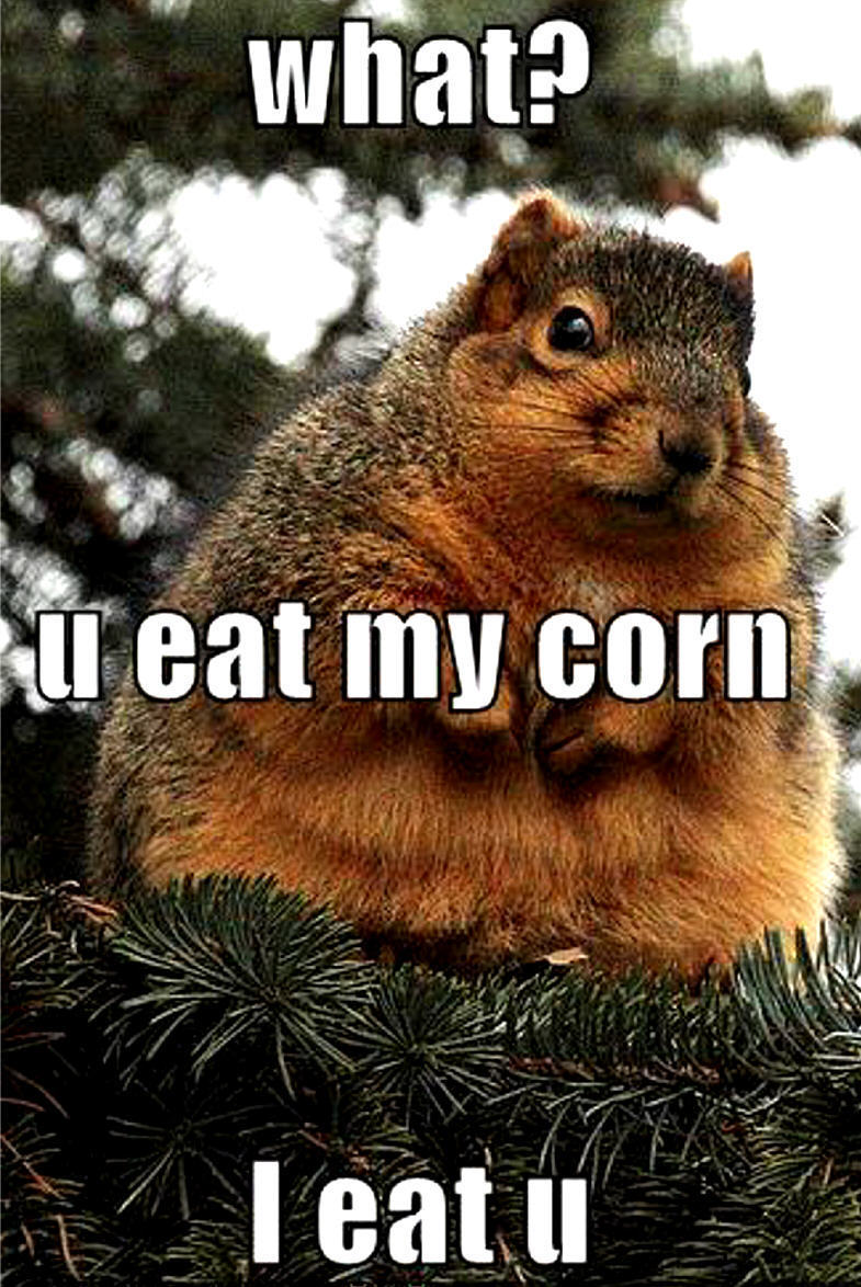 Funny Pictures Squirrel Animal Humor Photo Fanpop