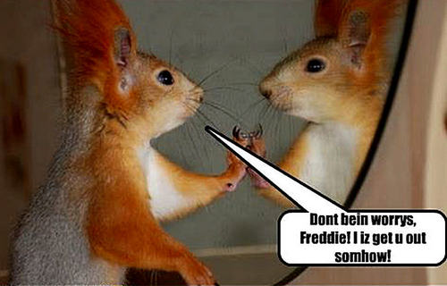 Animal Humor wallpaper possibly containing a chipmunk entitled squirrel funny