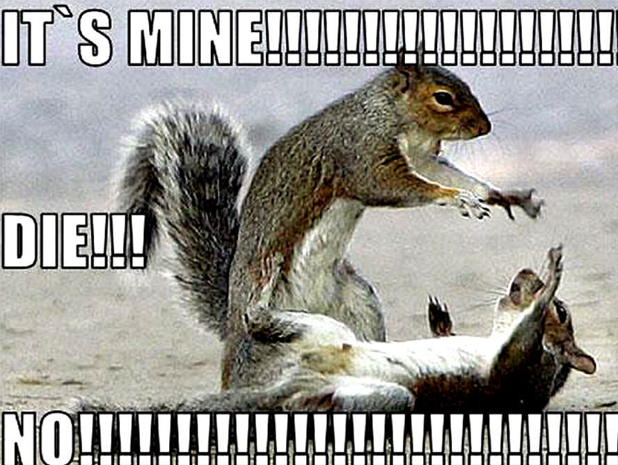 Funny squirrel pictures - photo#22
