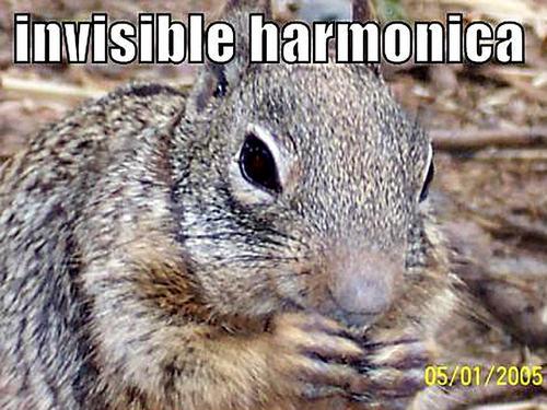 다람쥐 funny