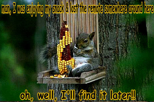 गिलहरी funny