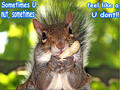squirrel funny - animal-humor photo