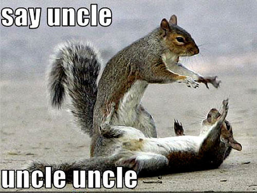 Animal Humor wallpaper probably containing a squirrel, an eastern grey squirrel, and a tree squirrel titled squirrel funny