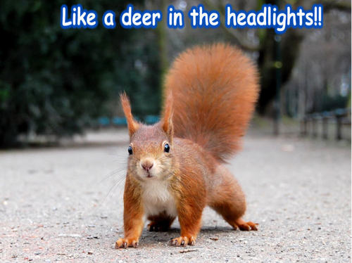 Animal Humor wallpaper probably with a chipmunk entitled squirrel funny
