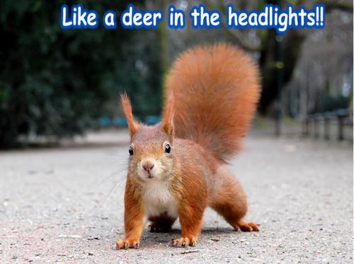 eekhoorn funny