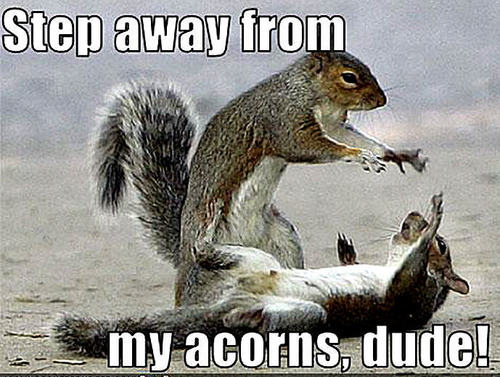 Animal humor images squirrel funny wallpaper and - Funny squirrel backgrounds ...