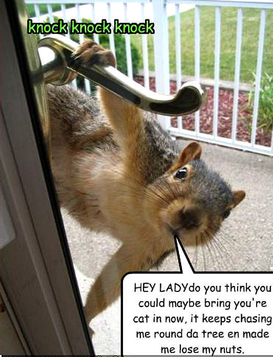 Animal jokes - photo#11