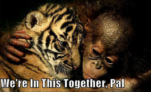 tiger & monkey funny - animal-humor Photo