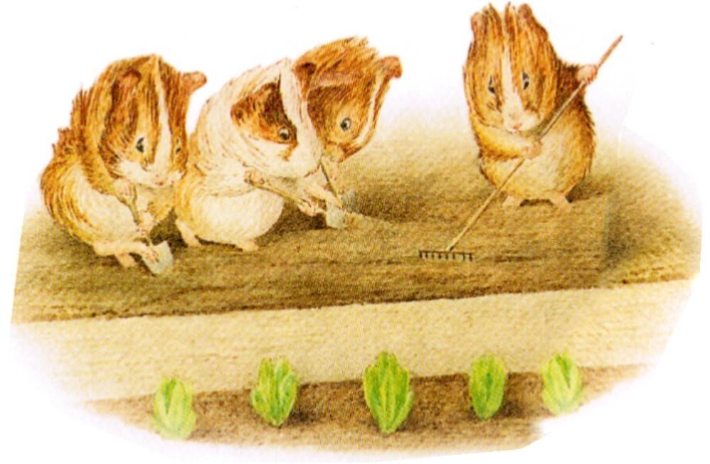 Beatrix Potter's Guinea Pigs I
