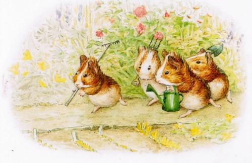 Beatrix Potter's guineapigs II