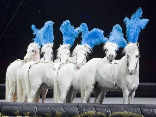 Circus Лошади