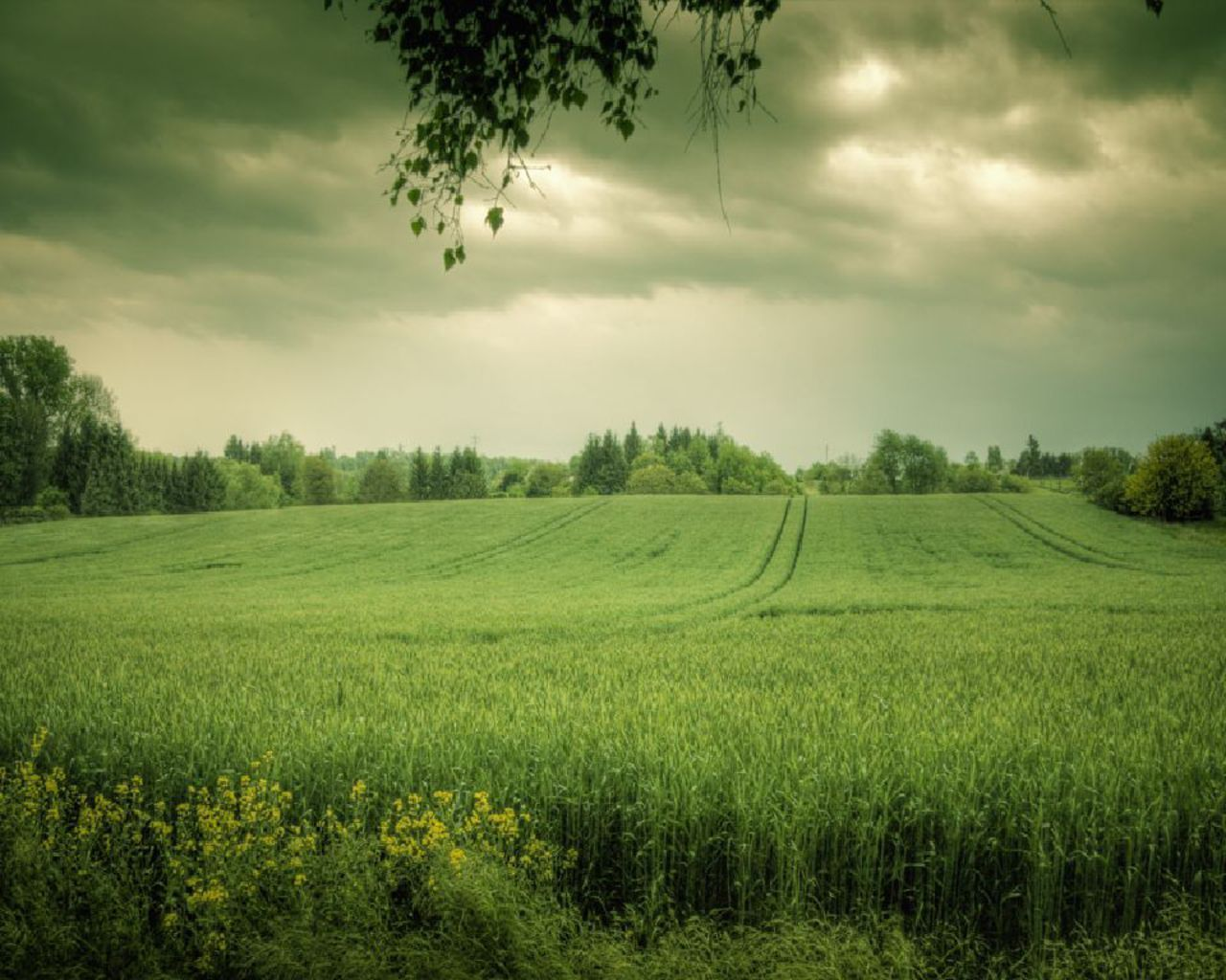 Images Of Green Fields