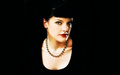 Pauley Perrette Wallpaper - pauley-perrette wallpaper
